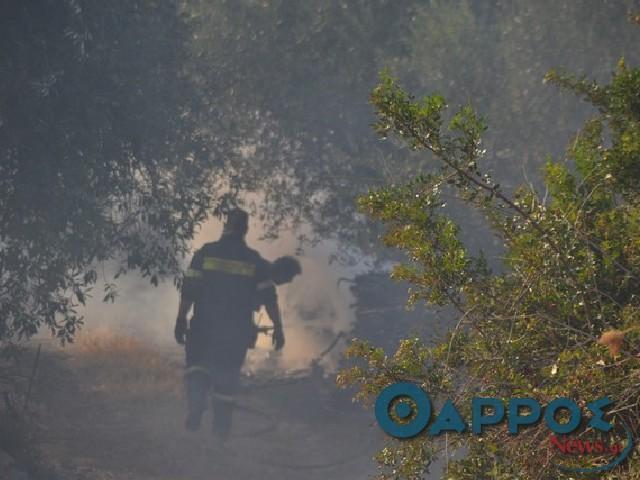 Πυρκαγιά στον οικισμό Καφού -Σίγουρος  για εμπρησμό ο δήμαρχος Μεσσήνης