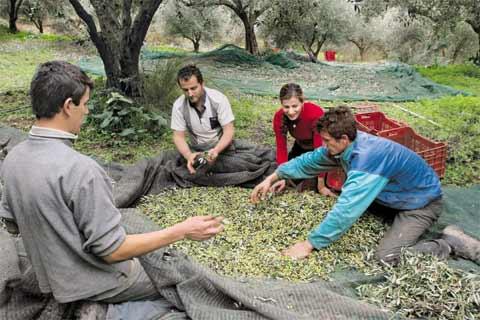 Ψαλίδι ως 30% στις επιδοτήσεις αγροτών
