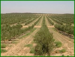 Γ. Λαμπρόπουλος: Γεωπόνοι του ΕΛΓΑ στη Μεσσηνία για  να διαπιστώσουν τις ζημιές στα ελαιόδεντρα