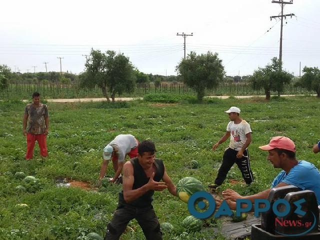 Προβλήματα σε καλλιέργειες στην περιοχή της Τριφυλίας