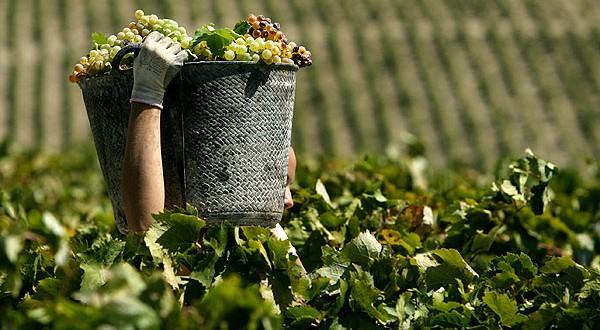 Πρόγραμμα 2 εκατ. για την  ενίσχυση των αμπελοκαλλιεργητών