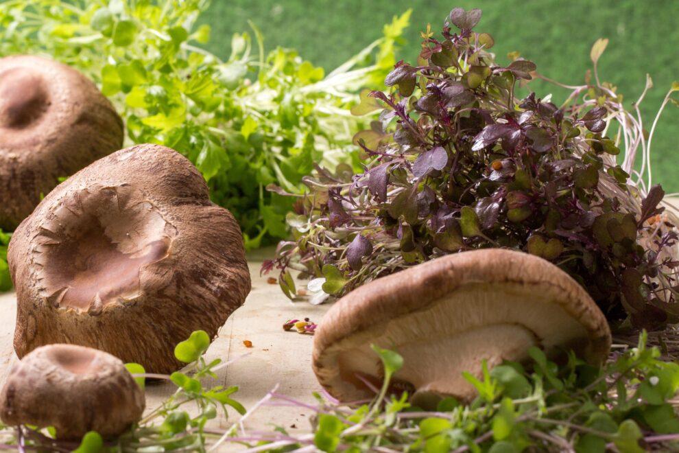 Harma Foods: Ένας κήπος στο πιάτο μας!