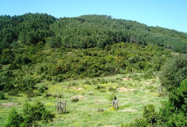 Τέλος στις εξαγορές δασικών  εκτάσεων βάζει η Ολομέλεια του ΣτΕ
