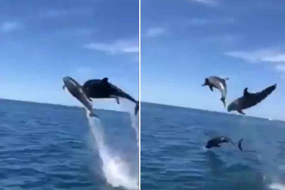 Εκπληκτικός «χορός» δελφινιών στην Πύλο (βίντεο)