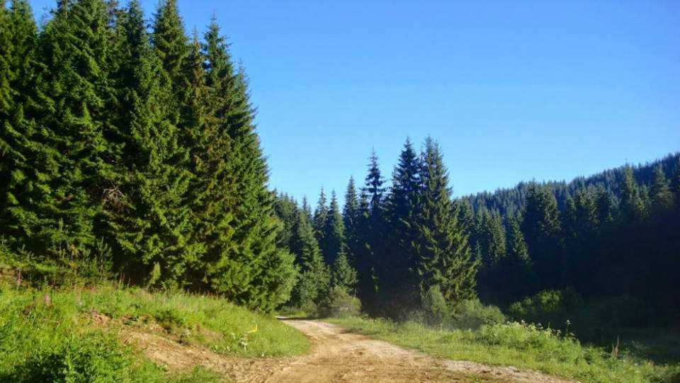 Προθεσμία για δασικούς χάρτες έως Σεπτέμβριο ζητεί η «ΠΟΜΙΔΑ»
