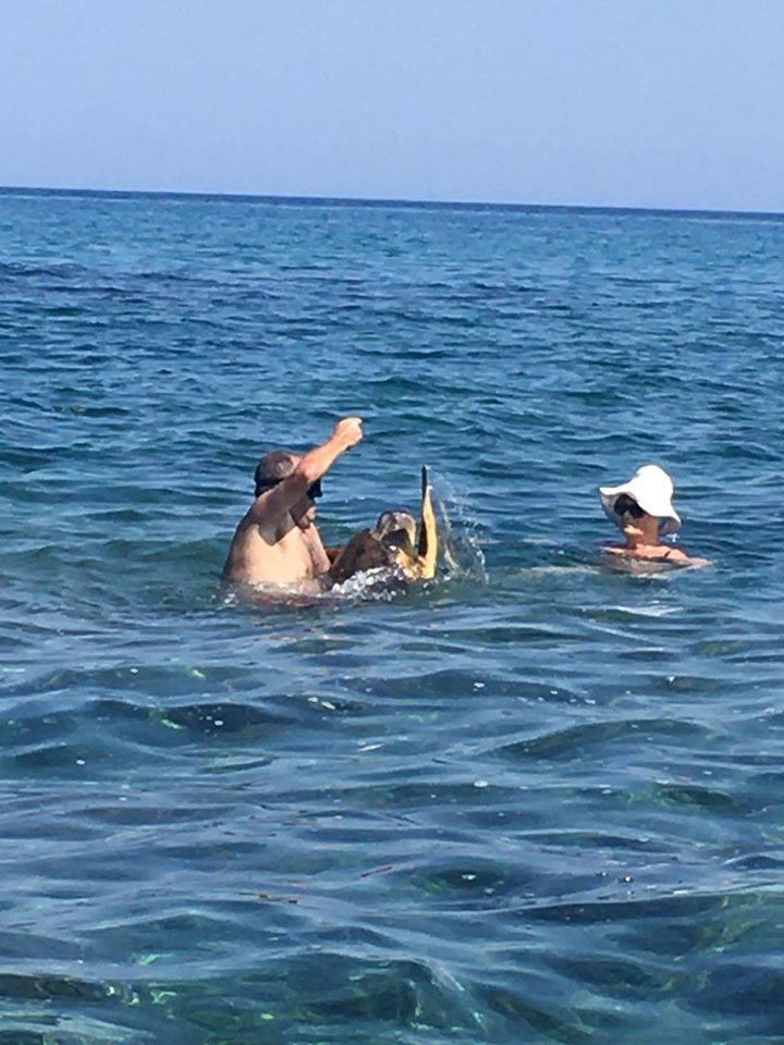 Λουόμενοι έσωσαν θαλάσσια χελώνα στην Κυπαρισσία!