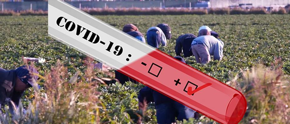 Μπάχαλο με τους εργάτες  γης στην Τριφυλία