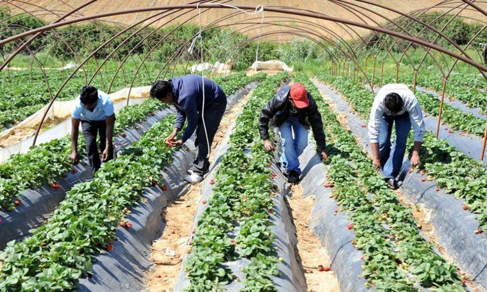 Φιλιατρά: Έξι αλλοδαποί εργάτες γης θετικοί σε  κορωνοϊό, φόβοι για διασπορά του ιού