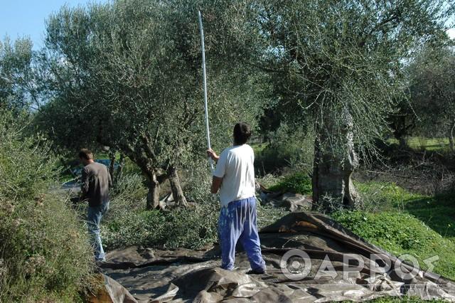 Διατέθηκαν 5.000 rapid test  για έλεγχο κορωνοϊού σε εργάτες γης από την Περιφέρεια Πελοποννήσου