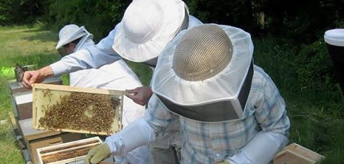 Πλήγμα στη Μελισσοκομία  και σε ποιότητα και σε παραγωγή