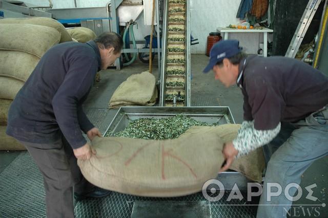 Αύριο θα πληρωθούν οι δικαιούχοι του πακέτου ενίσχυσης λόγω Covid-19 στο οποίο περιλαμβάνονται οι ελιές Καλαμών