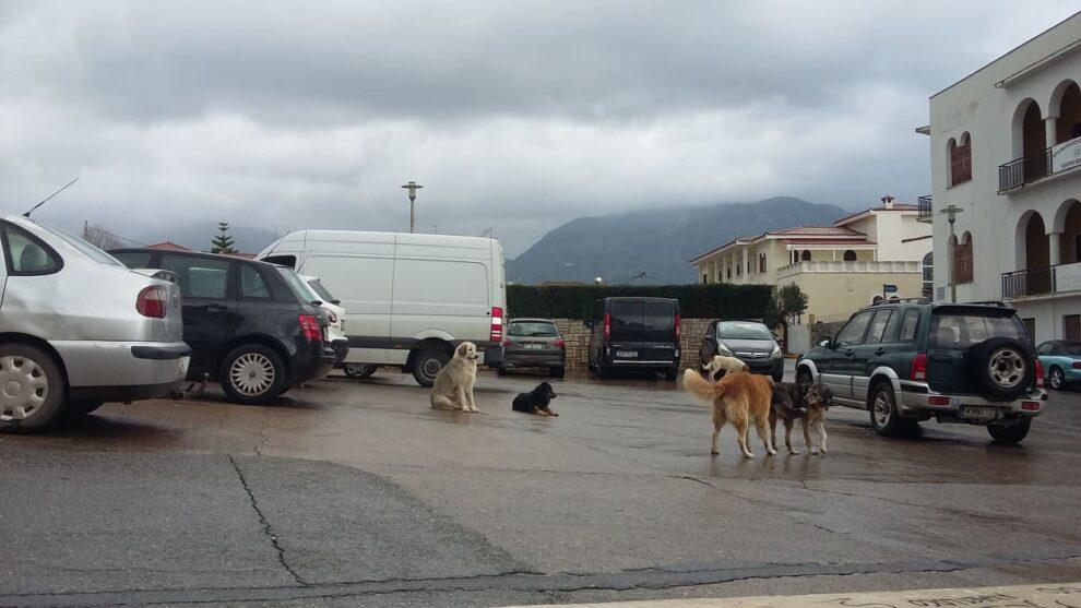 Έκκληση για προστασία και φιλοξενία αδέσποτης σκυλίτσας