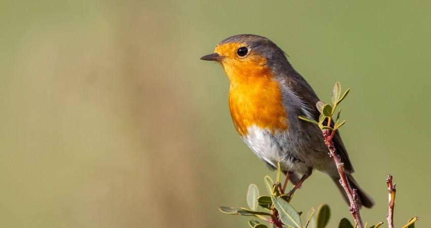 «Τα πουλιά δεν τραγουδούν ποτέ μέσα στις σπηλιές»