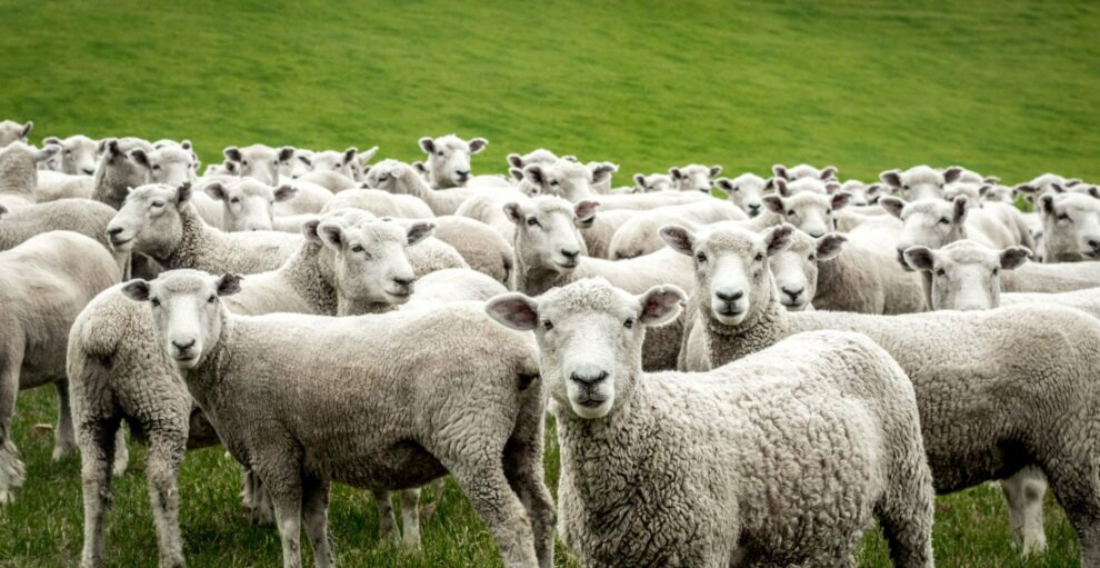 «Βλέπουμε τους αετούς να πετούν ψηλά μόνοι τους, ενώ τα πρόβατα μαζεύονται σε κοπάδι»