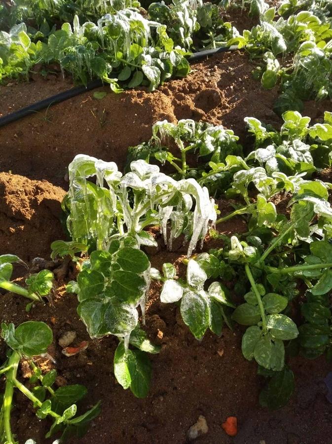 Δήμος Μεσσήνης: Αναγγελία ζημιάς σε καλλιέργειες από παγετό