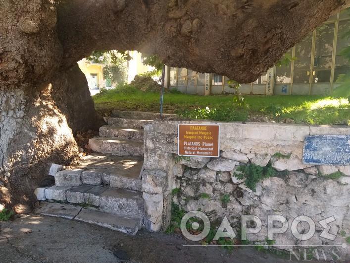 Μεσσηνία: Δένδρα- μάρτυρες  της Επανάστασης του 1821!