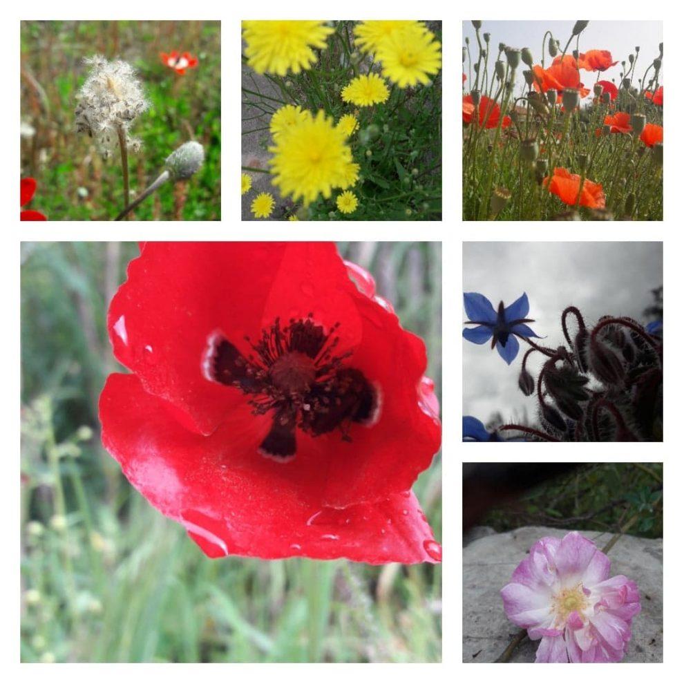 Μια ισχυρή φόρμουλα με λέξεις και λουλούδια κατά του κορωνοϊού…