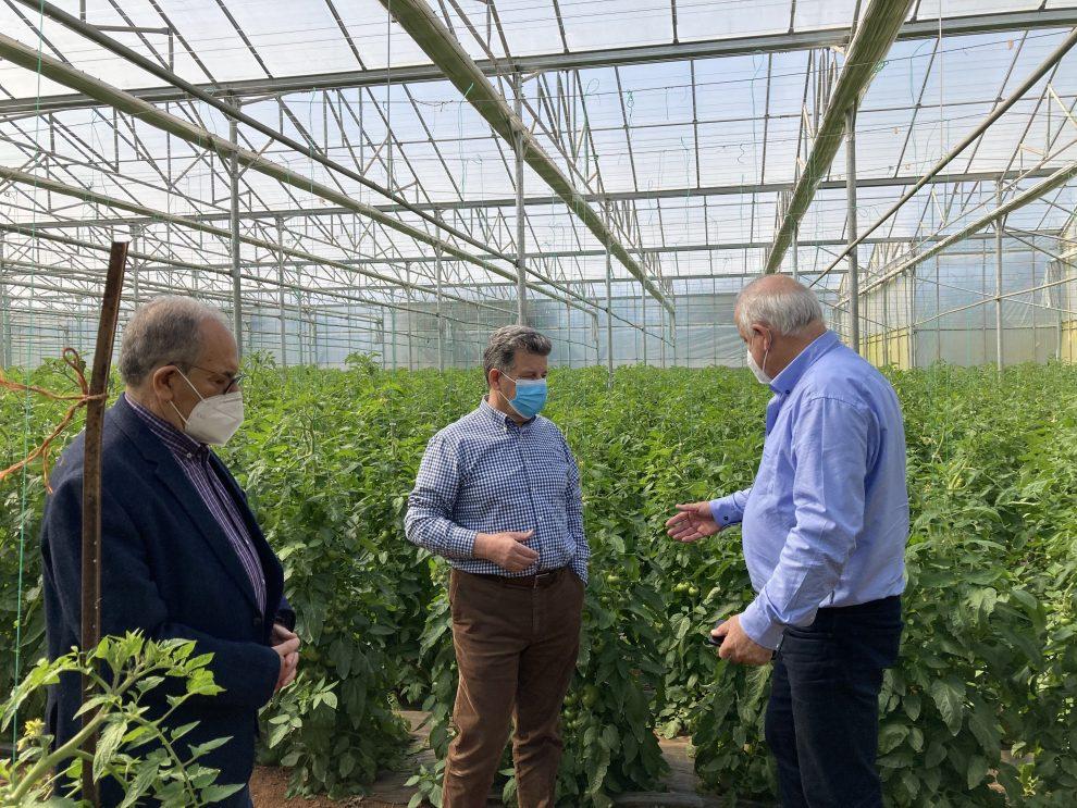 Τριφυλία: Πρωτοπορία και καινοτομία στις θερμοκηπιακές καλλιέργειες
