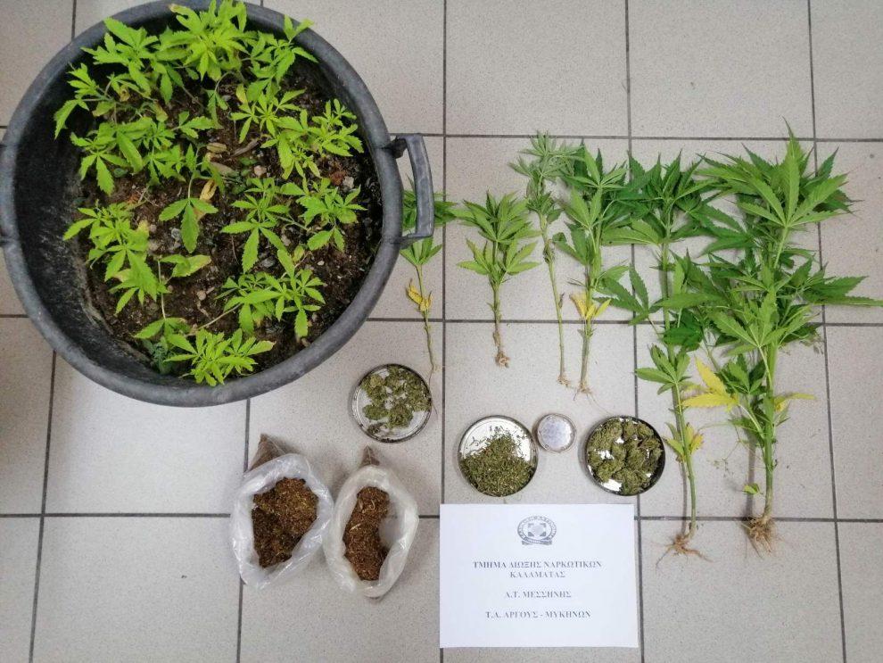 Καλλιεργούσε δενδρύλλια  κάνναβης σε Αργολίδα και Μεσσηνία