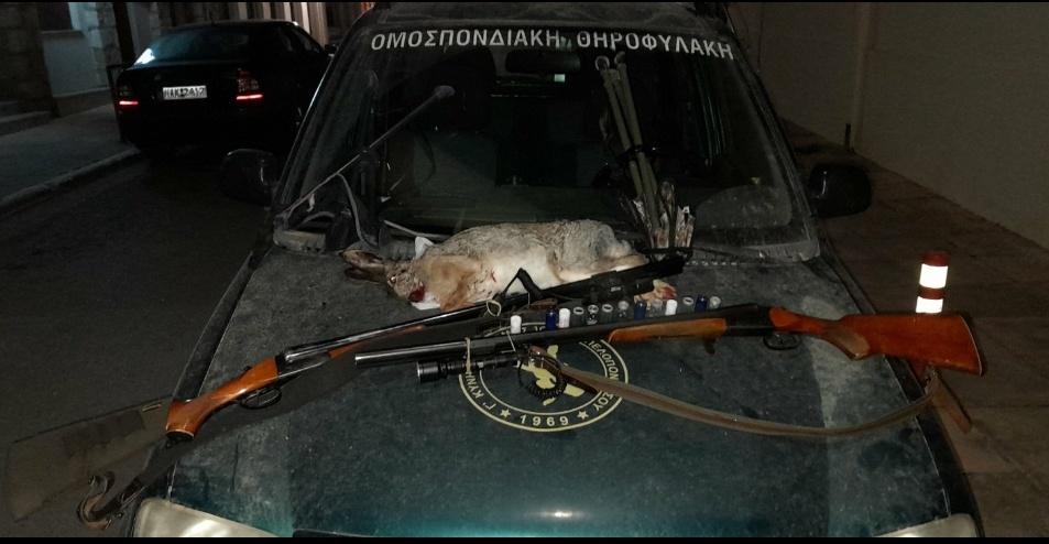 Συλλήψεις για βραδινή λαθροθηρία λαγού στην Τριφυλία