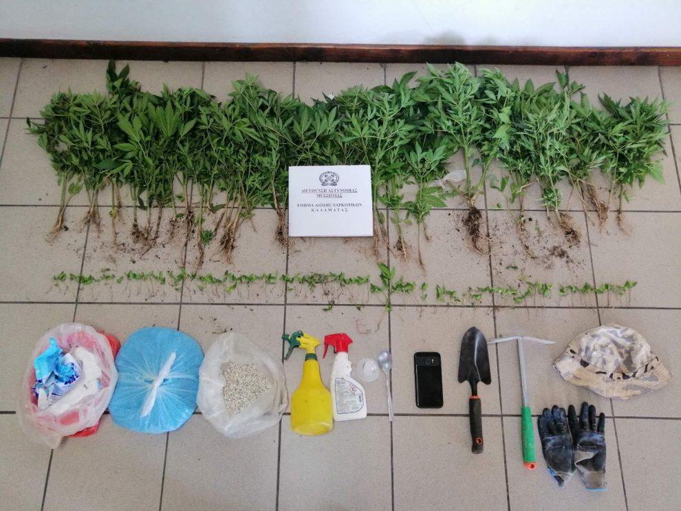 'Αμμος Μεσσηνίας: Καλλιεργούσε 174 χασισόδεντρα για να πληρώσει χρέη του!
