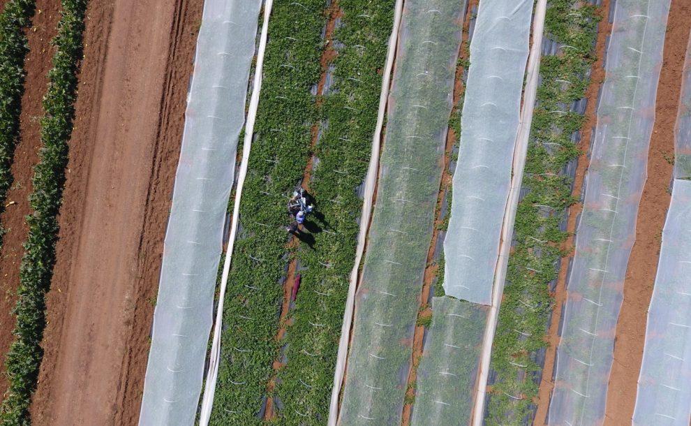 GreenWaterDrone: Παρουσιάστηκε το παγκοσμίως καινοτόμο έργο άρδευσης καλλιεργειών
