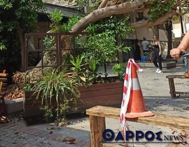 Πτώση δέντρου στο κέντρο της Καλαμάτας