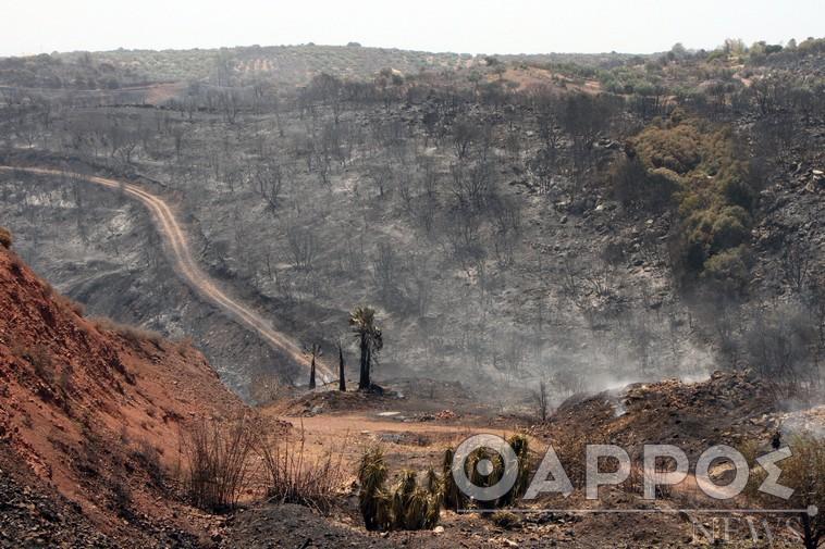 Άμεση αποζημίωση των πληγέντων από τις πυρκαγιές ζητά το Επιμελητήριο Μεσσηνίας