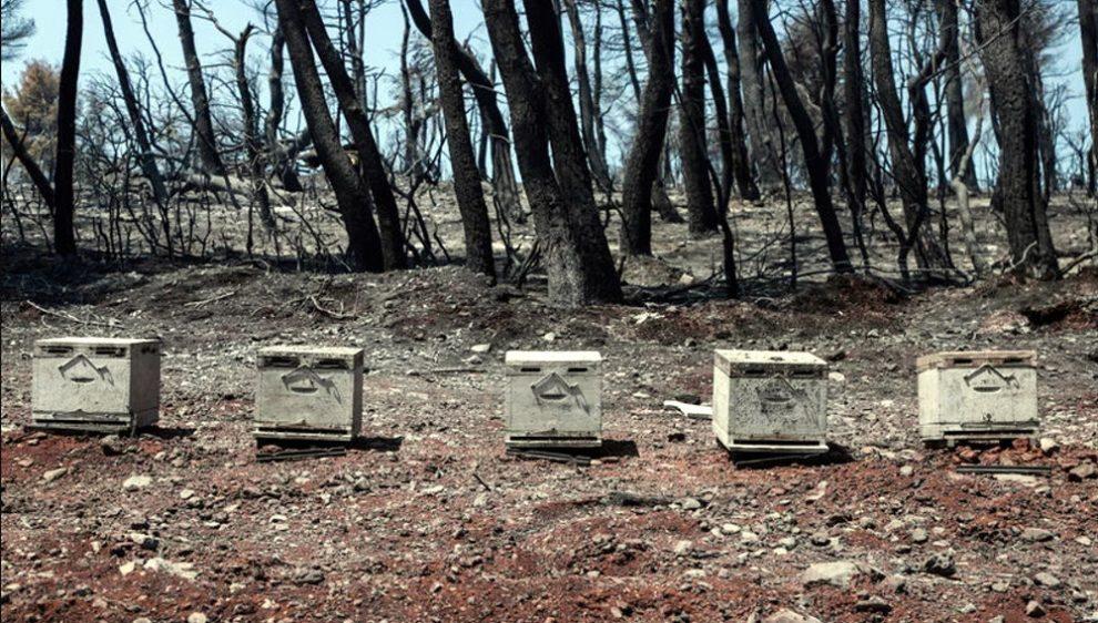 Οι μέλισσες χάθηκαν στις φλόγες