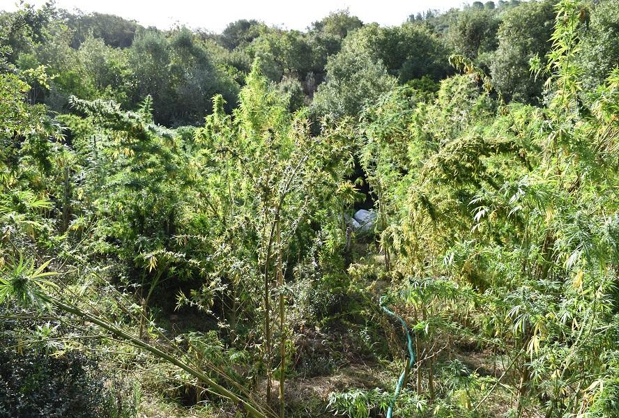 «Γραμμή παραγωγής χασίς» είχαν στήσει στο Σουληνάρι