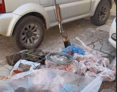 Μεσσηνία: Συνελήφθησαν δύο άτομα για λαθροθηρία  αγριόχοιρων